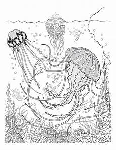 coloring pages for adults sea animals 17312 oceana animal coloring pages colorful drawings coloring books