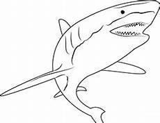 ausmalbild hai im zoo zum ausdrucken