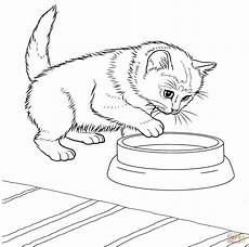 Katzen Malvorlagen Javanese Kitten Coloring Page Free Printable Coloring Pages