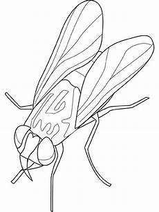 Insekten Ausmalbild Kostenlos Insekten Ausmalbilder Animaatjes De