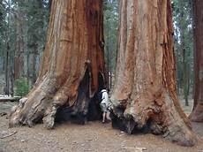 eqoi7a citispot abode of giants sequoia national park
