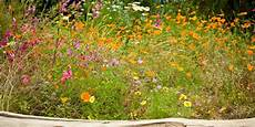 How To Create A Wildflower Meadow In Your Garden