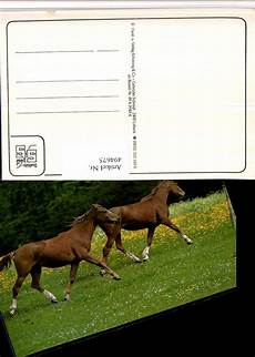 4947675 tier pferde wiese www ansichtskartenhandel at