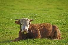 farm animals list animal sake