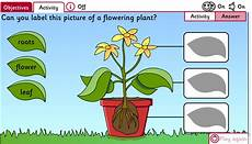 science plants ks1 worksheets 13580 science ks1 missmernagh