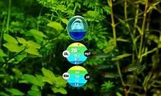 co2 im aquarium bedeutung messung d 252 ngung aquaristik