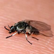 Wie Hoch Können Mücken Fliegen - 20 best images on celtic tattoos