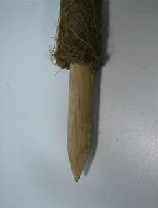 rankhilfe für zimmerpflanzen abverkauf zimmerpflanzen stab st 252 tze rankhilfe cocos 90 cm