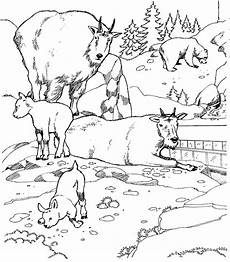 Easy Zoo Coloring Pages N 21 Coloring Pages Of Zoo