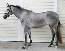 cavallo pomellato colours from the horses