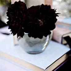 beautiful wallpapers real black flowers images