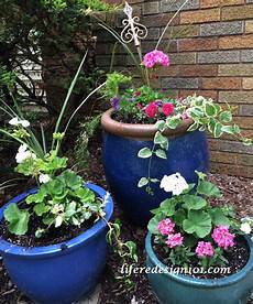 Easy Container Gardens no fail flower container gardens for beginners