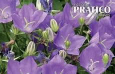fleur exterieur sans entretien cinq plantes vivaces sans entretien trucs et conseils