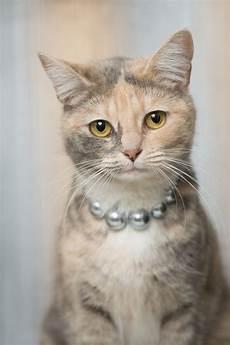 Malvorlage Gestreifte Katze Malvorlage Gestreifte Katze