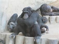 Ich Hab Schlechte Laune Foto Bild Tiere Zoo Wildpark