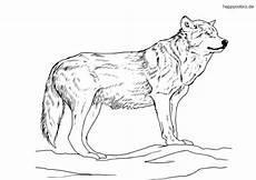 Kostenlose Malvorlagen Wolf Hase Und Wolf Ausmalbilder