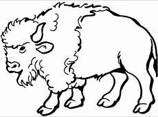 kleurplaten dieren: stier kleurplaten tekeningen dieren