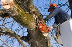 devis elagage arbre devis elagage et taille d arbre et de haies