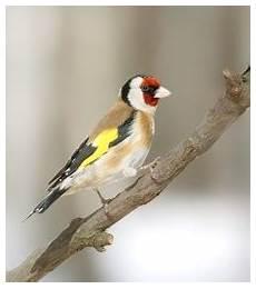 einheimische vögel im winter kleine vogelkunde heimische winterv 246 gel erkennen