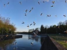 Helfer Gegen Nervige Insekten Moebeltipps Ch