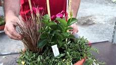 pflanze mit i pflegeleichte k 252 belbepflanzung dipladenia portulak