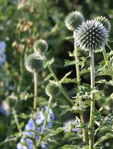 pflanzen für trockene sonnige standorte pflanzen f 252 r trockene und sonnige standorte