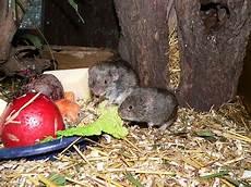 Mäuse Im Haus - m 228 use tierpark nordhorn