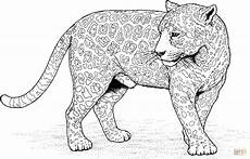 jaguar 12 coloring page free printable coloring pages