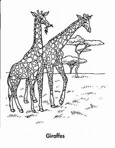 coloring pages animals in the forest 17029 rainforest animal coloring pages getcoloringpages