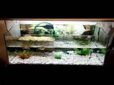 vasche x tartarughe d acqua cosa ho una domanda sulle tartarughine potete aiutarmi
