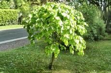 Arbre Pour Haie Qui Pousse Vite Jardin Tous Nos Conseils Guides Et Astuces Du Jardinage