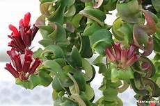 zimmerpflanzen die wenig licht brauchen gr 252 ne und