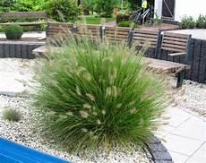 steingarten gräser winterhart pennisetum alopecuroides quot hameln quot lenputzergras