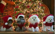 christmas animals pictures photos and images for facebook pinterest and