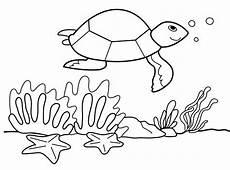 Malvorlagen Unterwasser Tiere Kostenlose Malvorlage Tiere Schildkr 246 Te Unter Wasser Zum