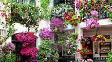 fiori in terrazzo impressionante das paredes ao teto lindos jardins suspensos