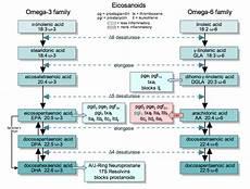 omega 3 6 9 explained