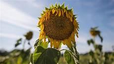 Wettervorhersage August 2018 - 30 tage wettervorhersage vom 20 07 2018 der august bleibt