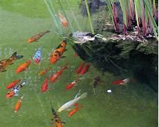 Oasis Aquarium Poisson