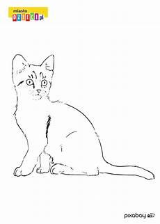 Ausmalbilder Siamkatze Kolorowanka Mały Kotek Malowanki Z Kotkami Dla Dzieci Do