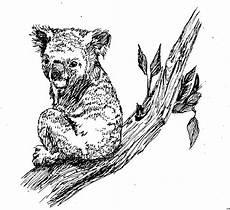 Info Malvorlagen Gratis Ausmalbilder Tiere Koala Tippsvorlage Info