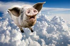il maiale volante that time a flying pig grounded every plane at s
