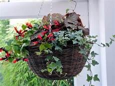 sukkulenten winterhart balkonkasten garden ideas for your own planting flowers in the