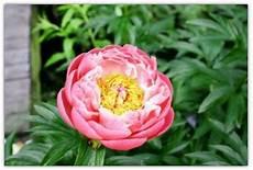 fiori di tutto il mondo i 5 fiori tra i pi 249 belli mondo