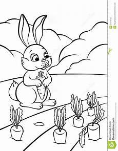 Ausmalbild Hase Karotte Wenige Hasen Mit Karotte Stock Abbildung Illustration