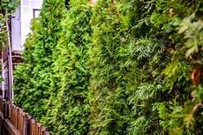 Welche Pflanzen Als Sichtschutz - welche pflanzen eignen sich als sichtschutz 187 eine auswahl