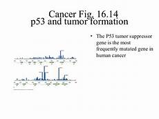 lecture 10 the biology of cancer p53
