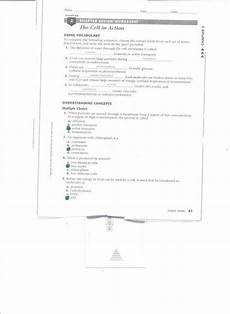 cell division worksheet with answers 6961 chapter 10 cell growth and division worksheet answer key briefencounters