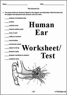 3 page human ear worksheet or test answer key can also be downloaded science pinterest