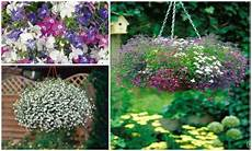 H 228 Ngepflanzen F 252 R Blumeneln 10 Elpflanzen Ideen